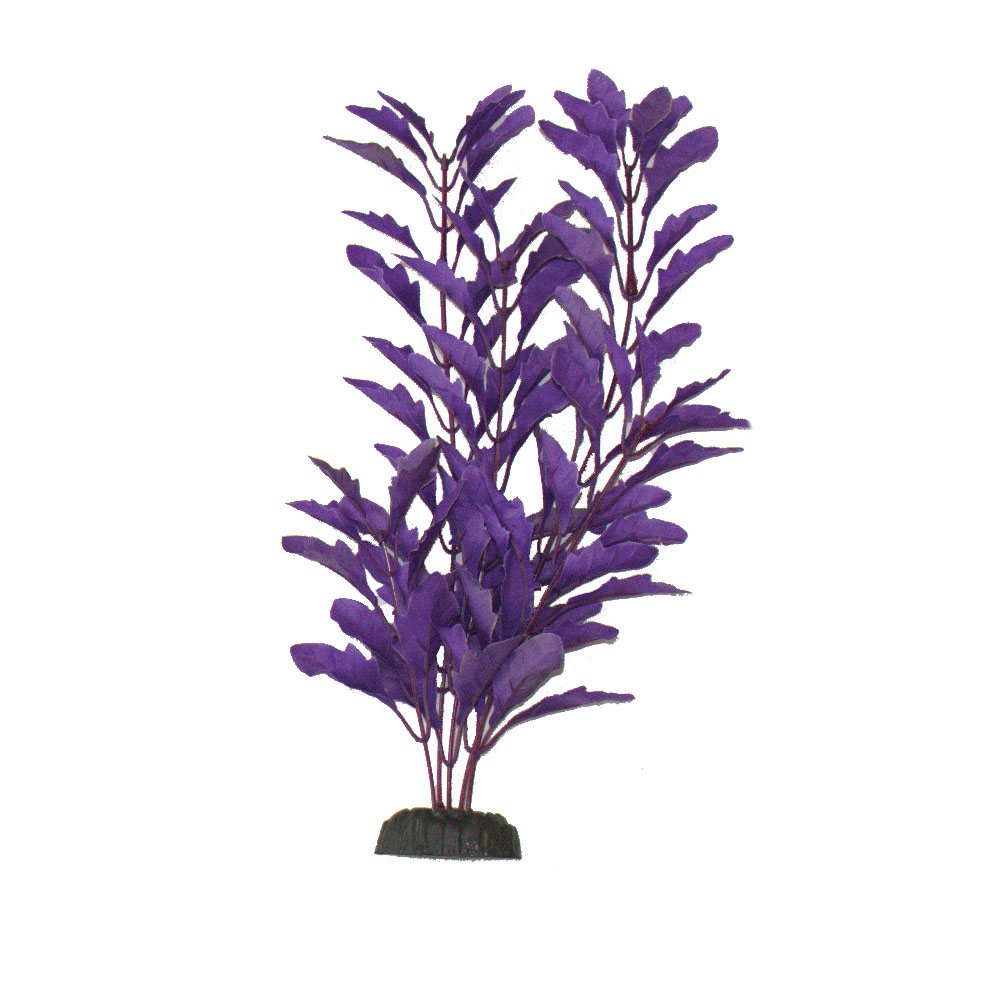 Nasaea Purple