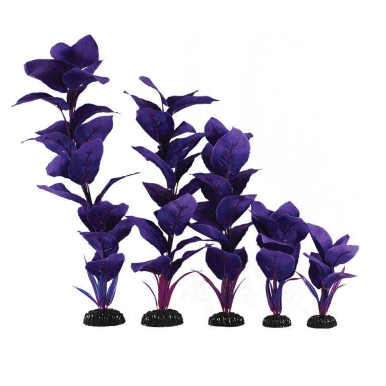 Corymbosa Blue Silk