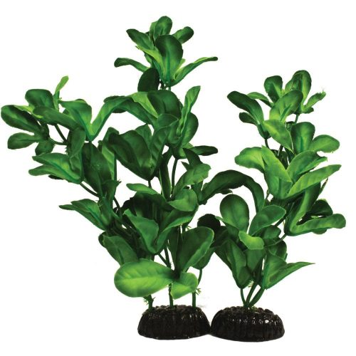 Shinnerisa Silk aquascaping aquarium plant