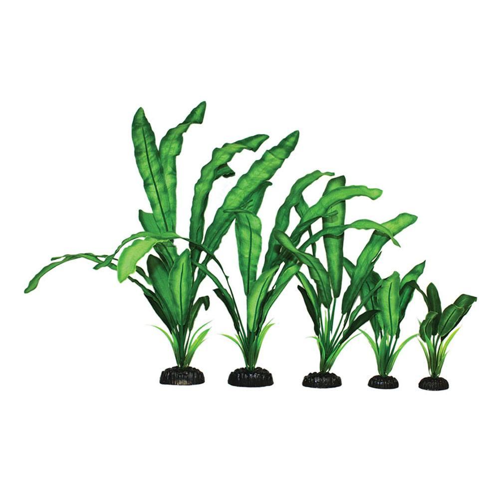Echinodorus Green Silk