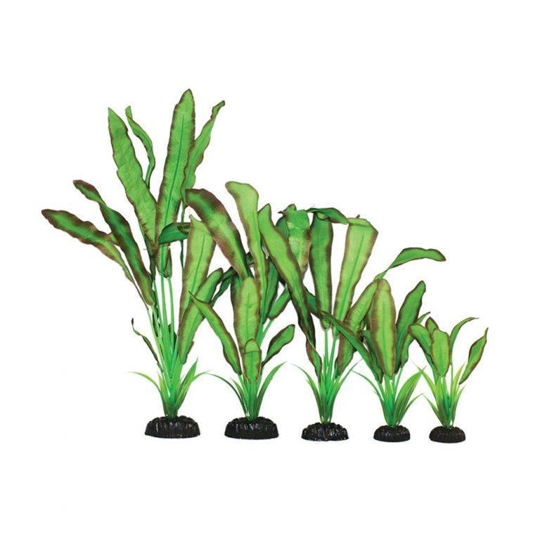 Echinodorus Green / Red Silk