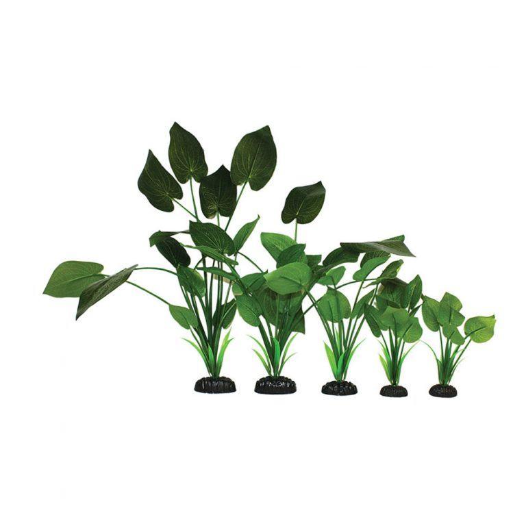 Syngonium Green Silk