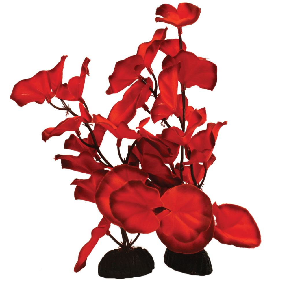 Lily Red Silk Aquascaping Aquarium Plant