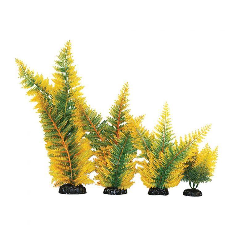 Hugo Kamishi Broad Leaf Fern Yellow Plant