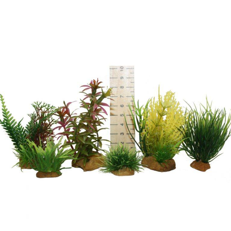 Hugo Kamishi Designer Aquarium Products