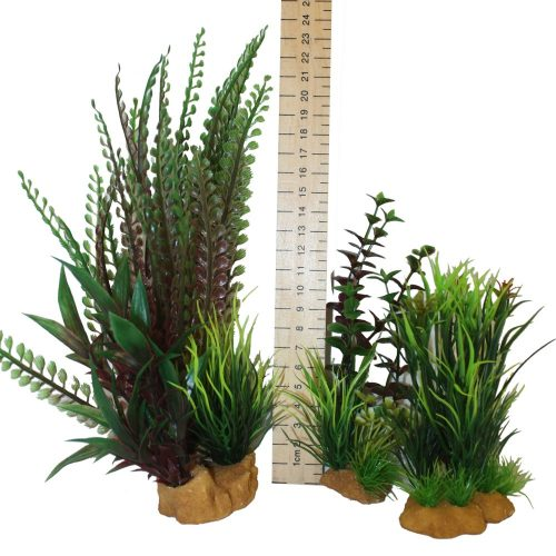 Hugo Kamishi Plant – box 3 mixed bushy plants