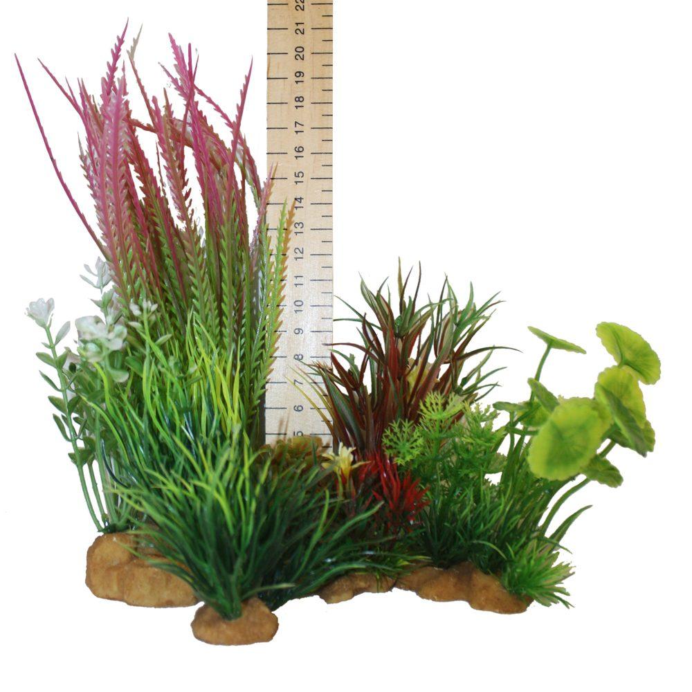 Hugo Kamishi Plant – box 4 mixed bushy plants
