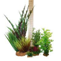 Hugo Kamishi Plant – box 4 mixed plants -spikey