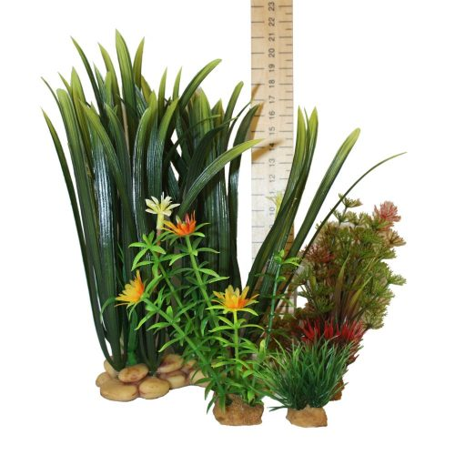 Hugo Kamishi Plant – box 4 mixed plants