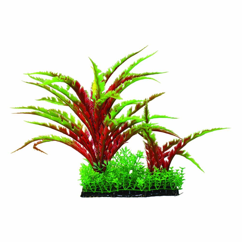 Hugo Kamishi Plant Cluster 20cm