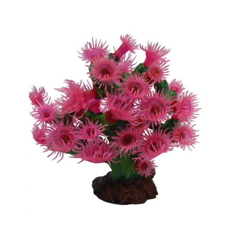 Turbistria Pink 15x10x15