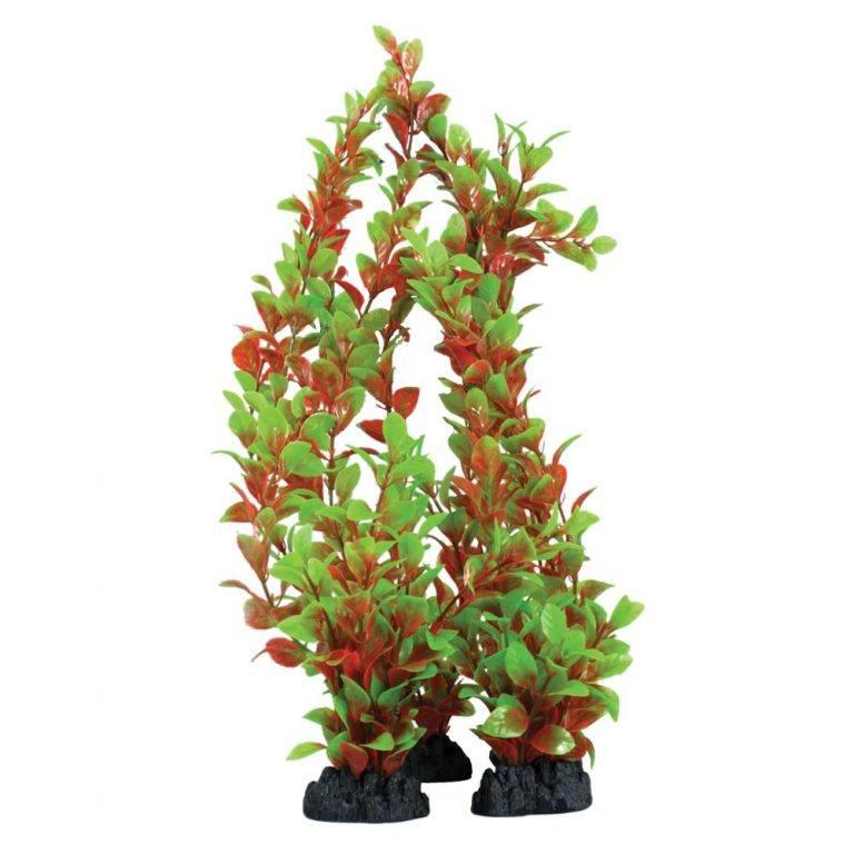 Hugo Kamishi Red & Green Ludwigia