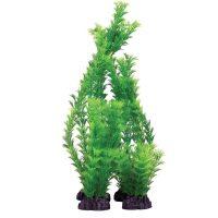 Hornwart Green