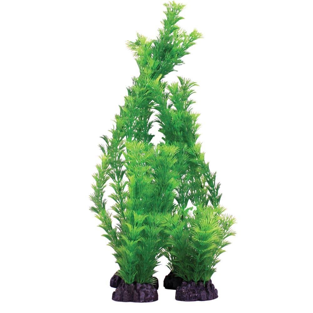 Hugo Kamishi Hornwort Green Plant