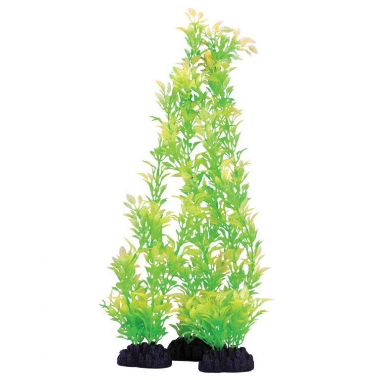 Hugo Kamishi Rose Leaf Green Plant