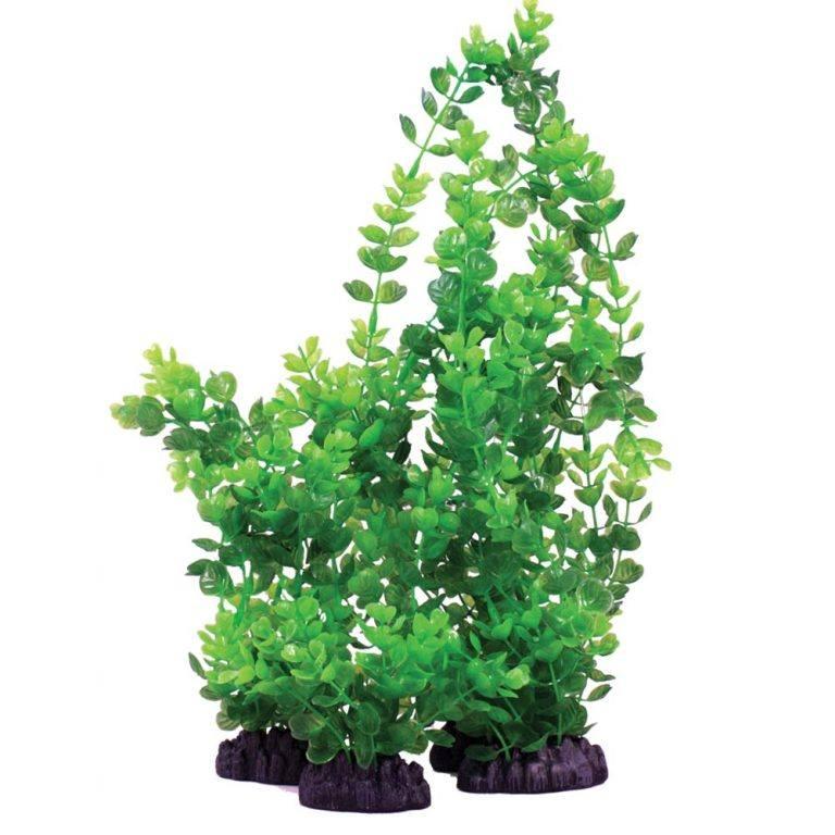 Hugo Kamishi Rotala Indica Green Plant