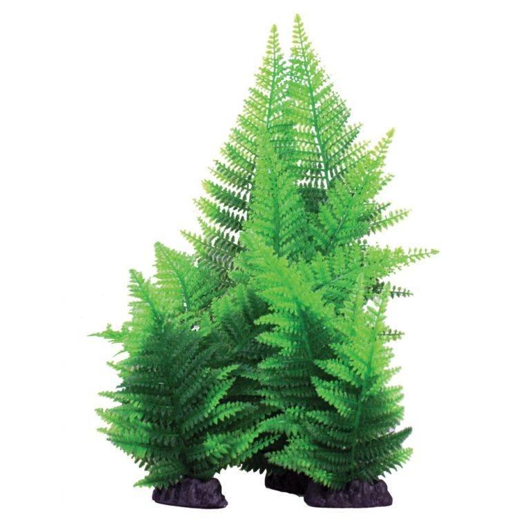 Hugo Kamishi Green Broad Leaf Fern Plant