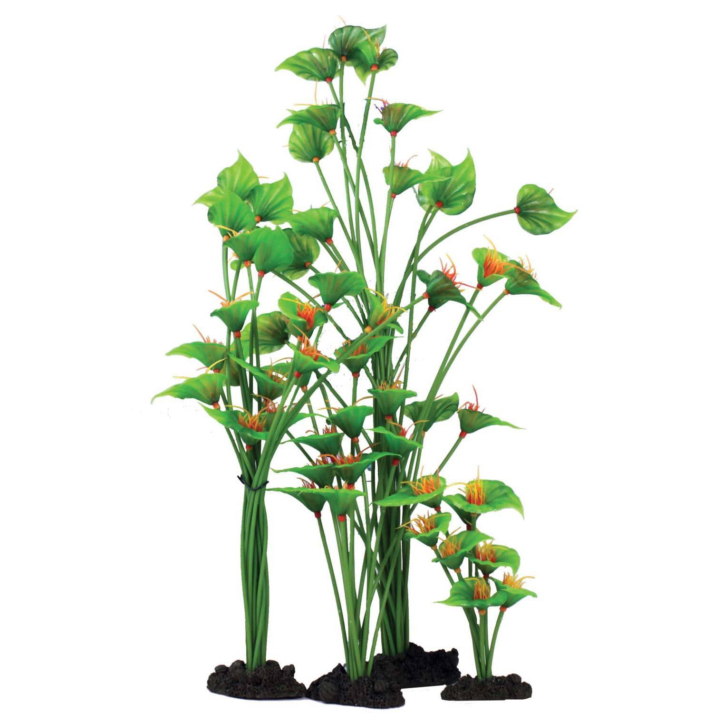 Hugo kamishi Horn Plant