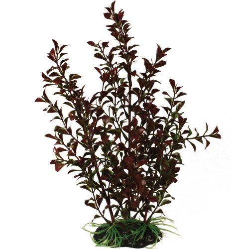 Bushy Plant