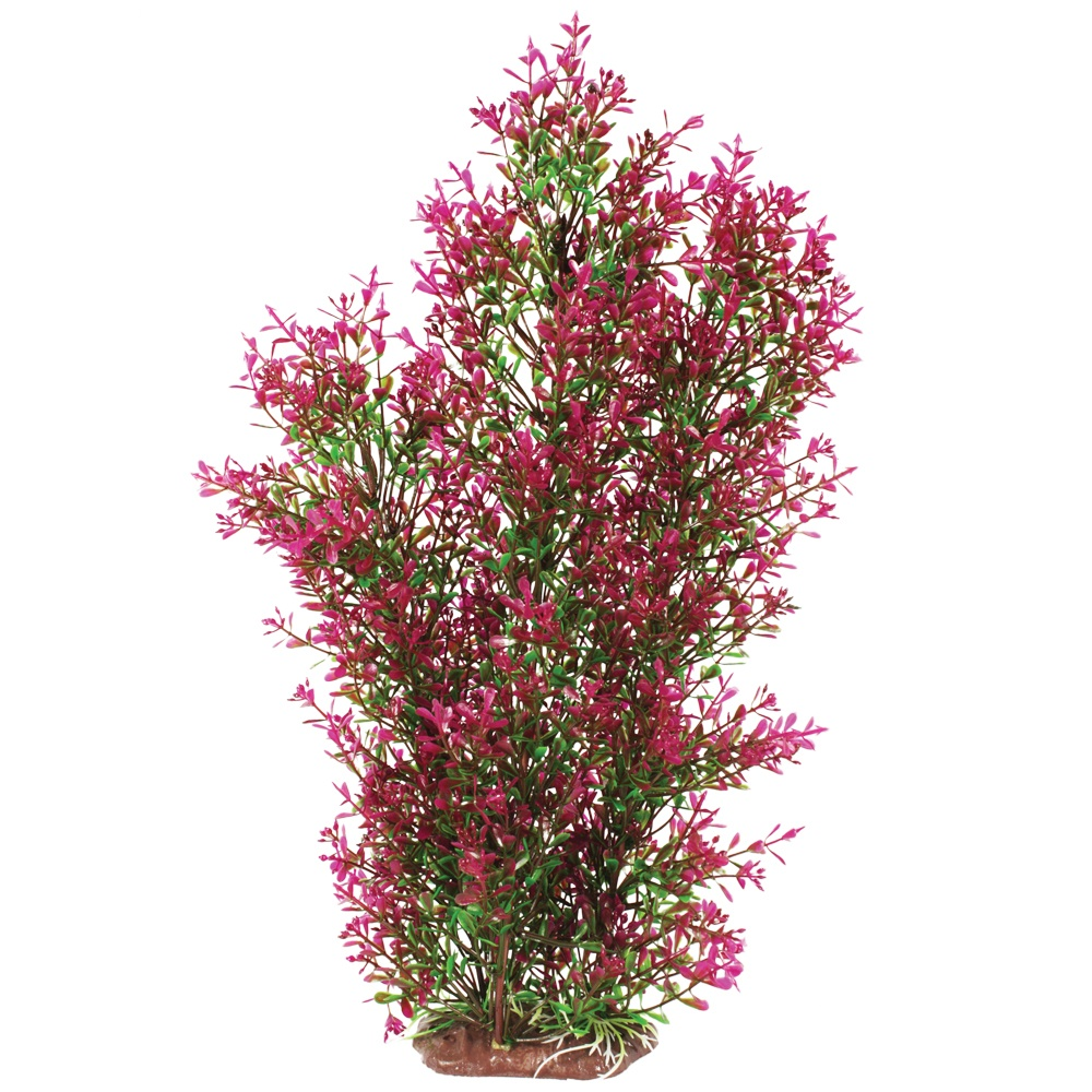 Hugo Kamishi Utricularia Purple Plant