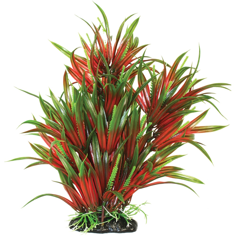 Hugo Kamishi Microsorum Narrow Bushy Plant