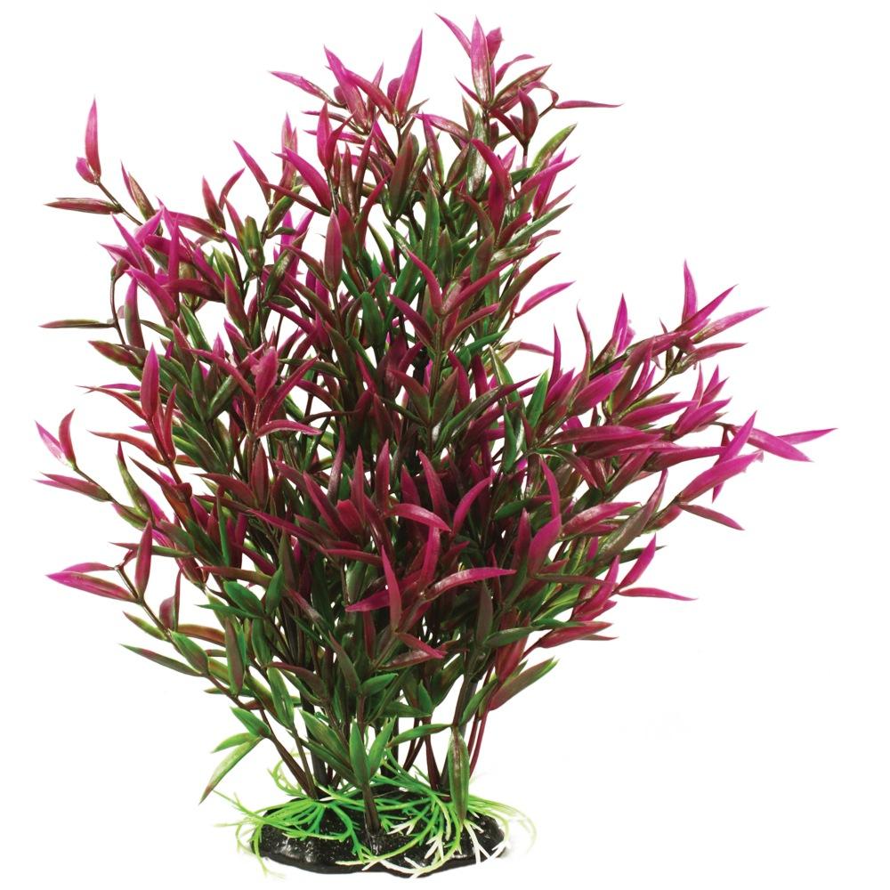 Hugo Kamishi Heteranthera Zosterifolia