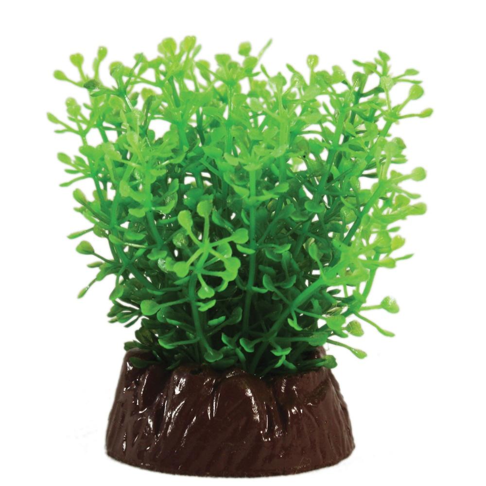 Hugo Kamishi Rotala Compact Plant 10cm