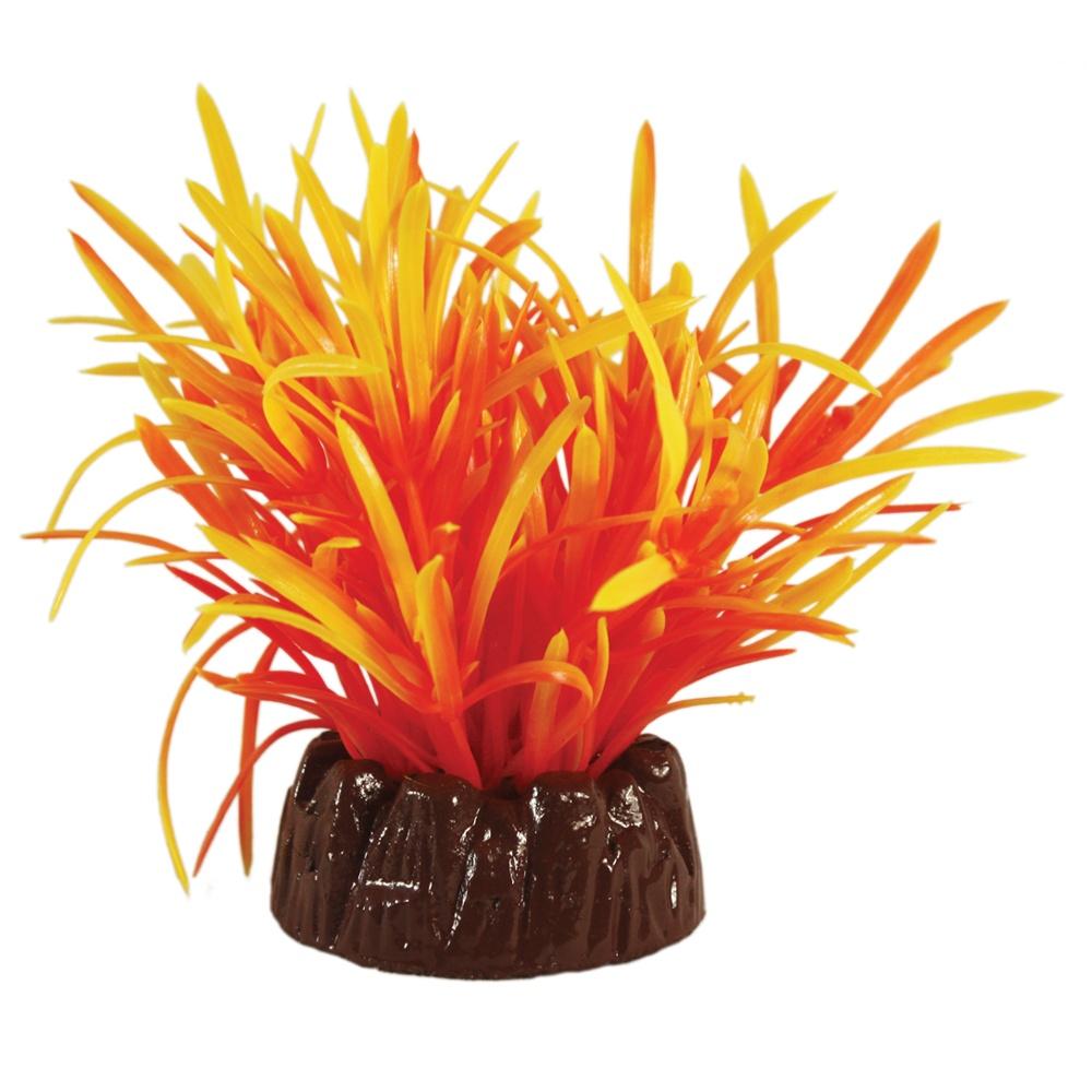 Hugo Kamishi Echinodorus Orange 10cm