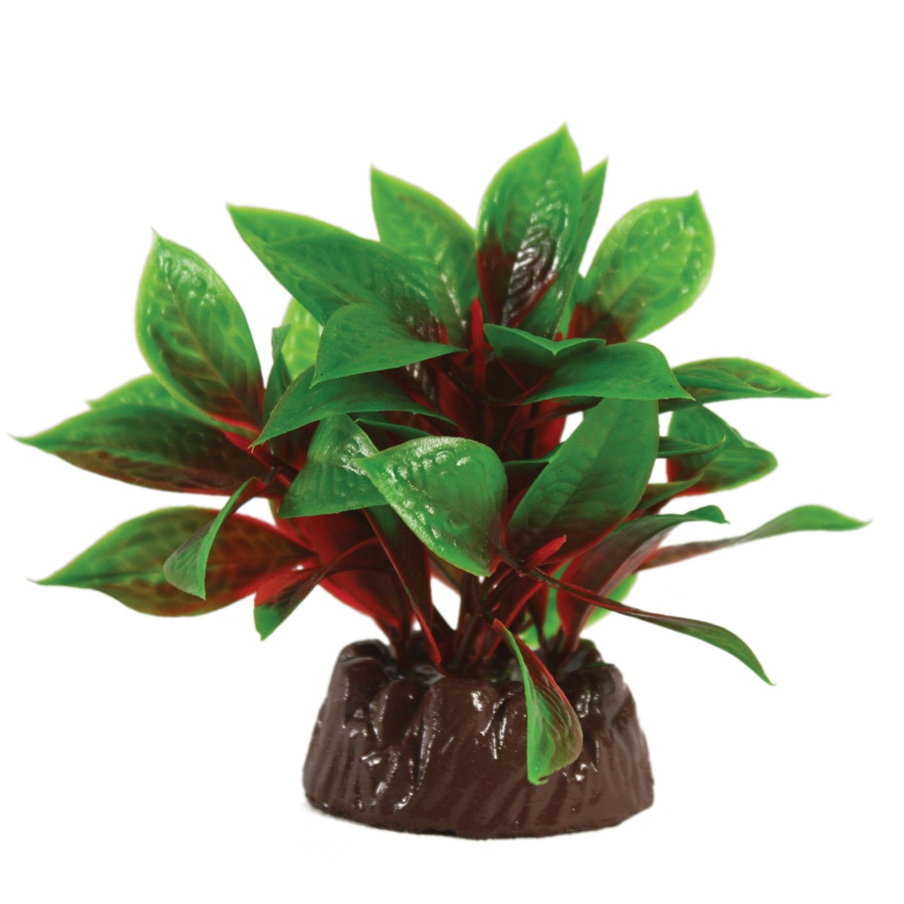 Hugo Kamishi Bacopa Green/Red 10cm