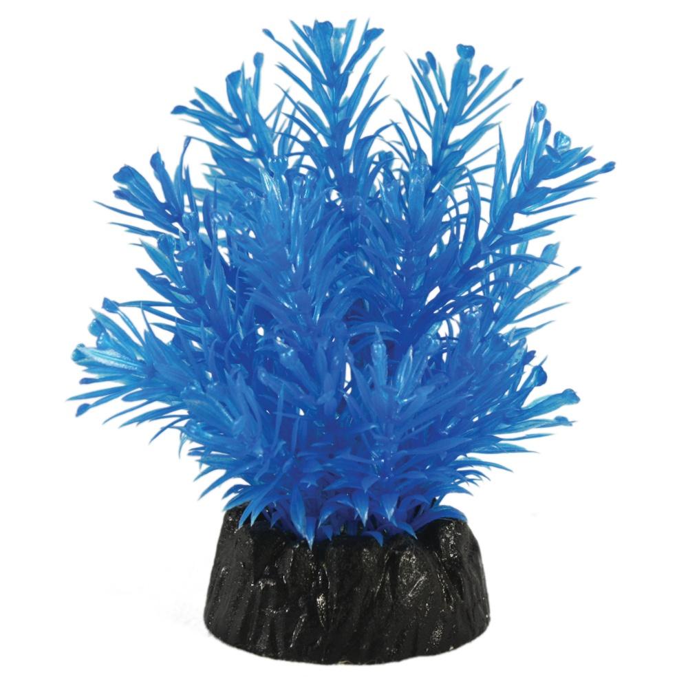 Hugo Kamishi Hottonia Blue plant 10cm