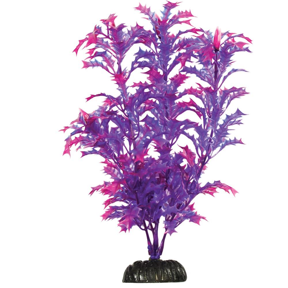 Hugo Kamishi Egeria Blue/Purple
