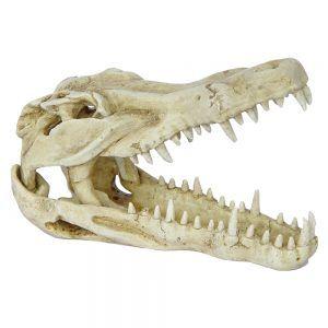 Hugo Kamishi Crocodile Skull 24x12x16cm
