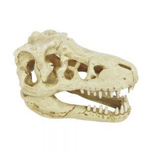Hugo Kamishi Dinosaur Skull 18x12x11cm