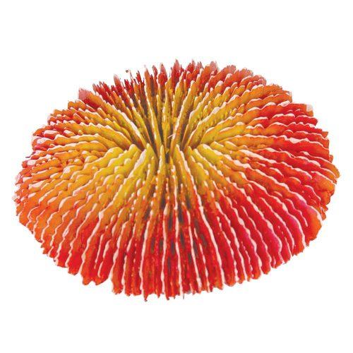 Torch Coral 15x13x13cm