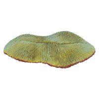 Slipper Coral 11x10x3cm