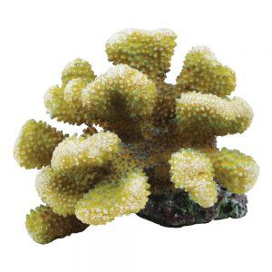 Pocipora Coral 15x16x11cm